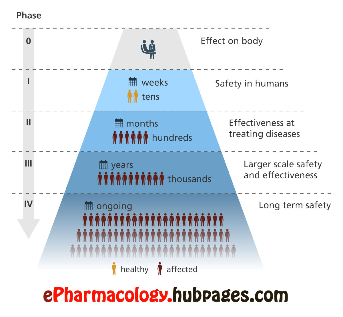 Flowchart showing different clinical phases of drug development