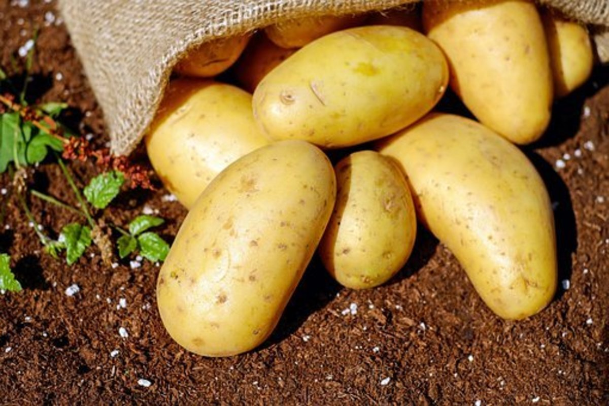 Eat Raw Potatoes To Stay Healthy
