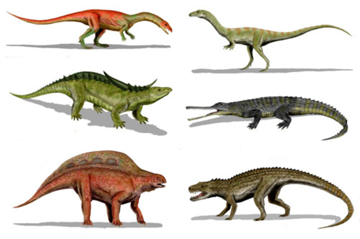 A collection of Pseudosuchian species.