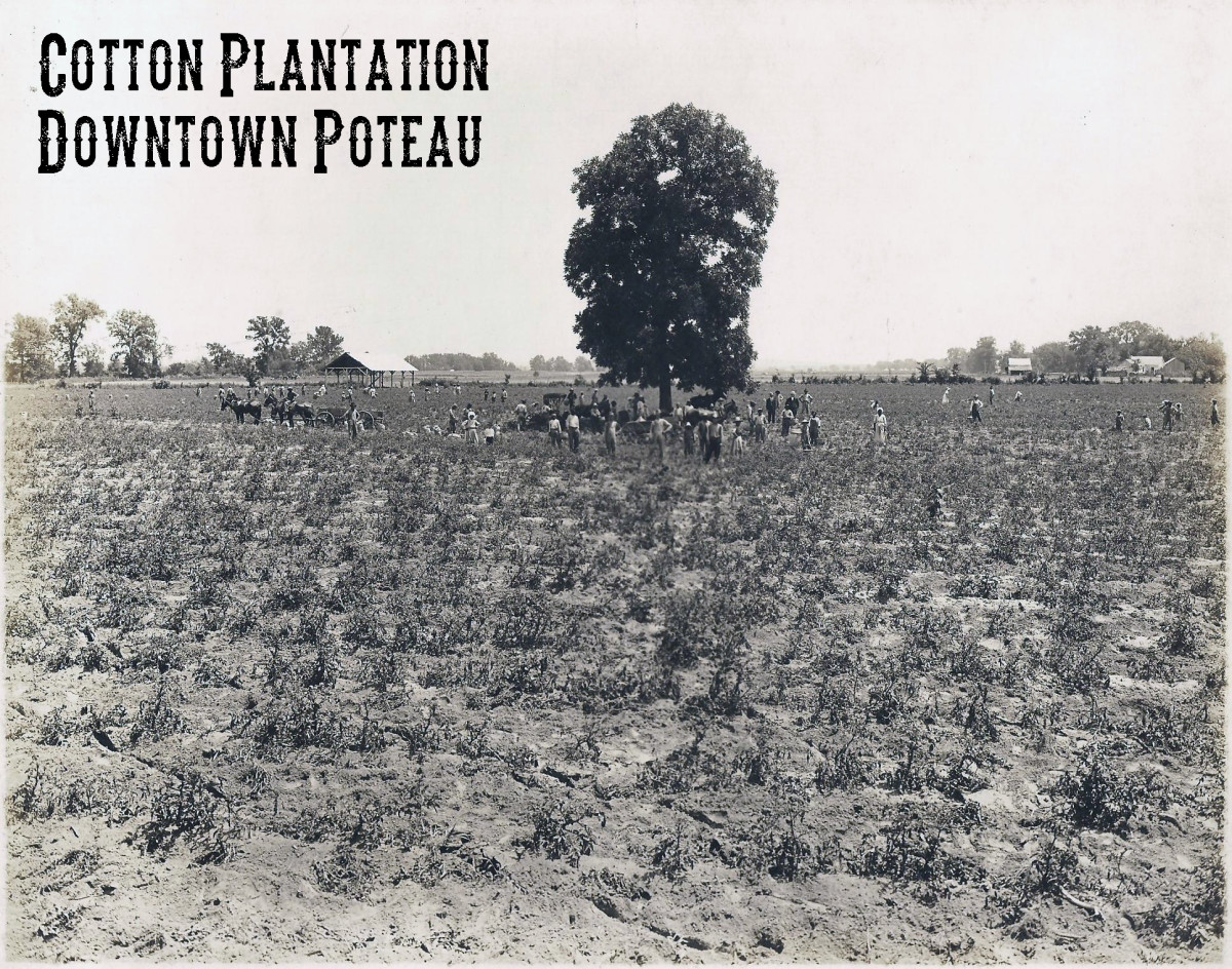 Cotton Plantation owned by B.H. Harper