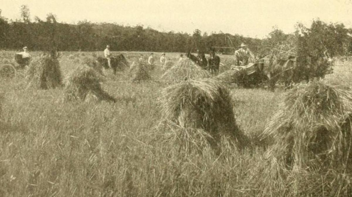 Harvest Time, just outside Poteau, late 1800s