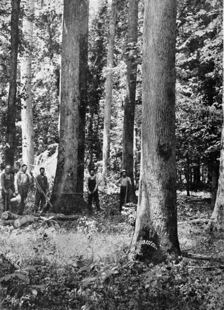 Logging in Heavener, Late 1800s