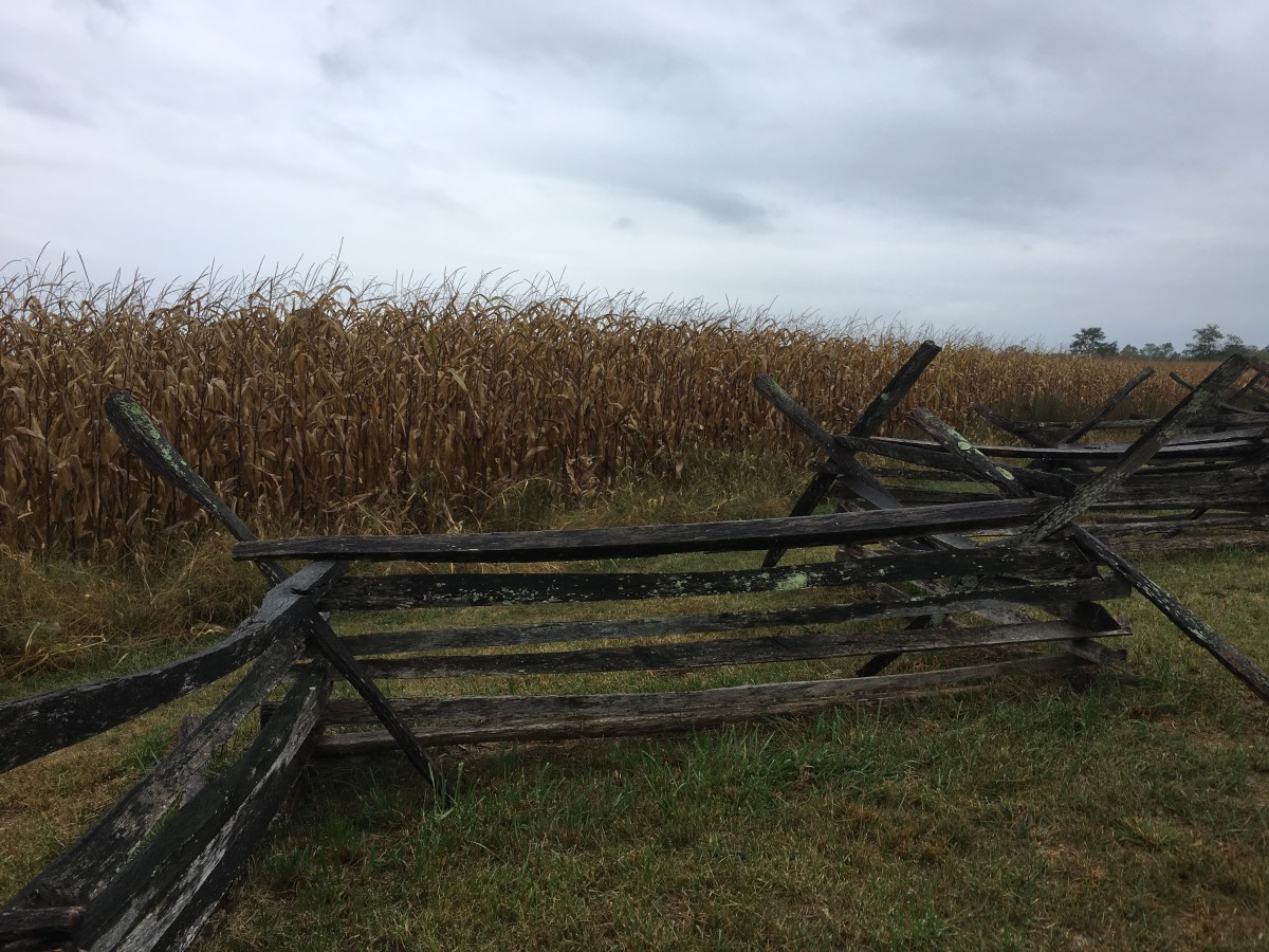 Fence along North Edge of The Bloody Cornfield -- Trail Stop 4
