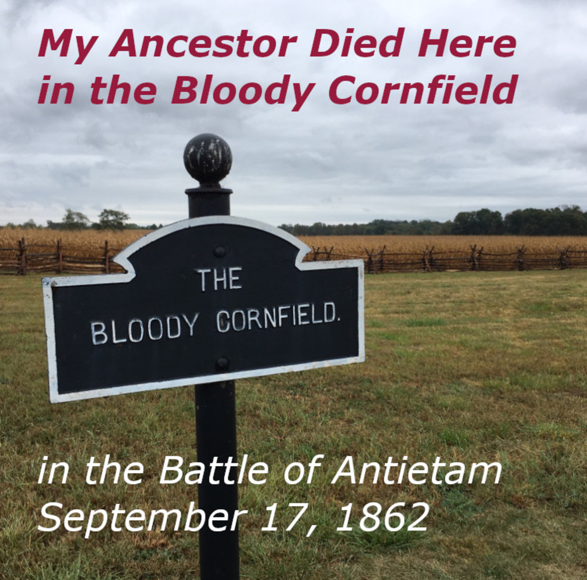 Bloody Cornfield, Antietam National Battlefield, Sharpsburg, Maryland | Photo taken in September when Corn is ready for Harvest | Like is was during the Battle