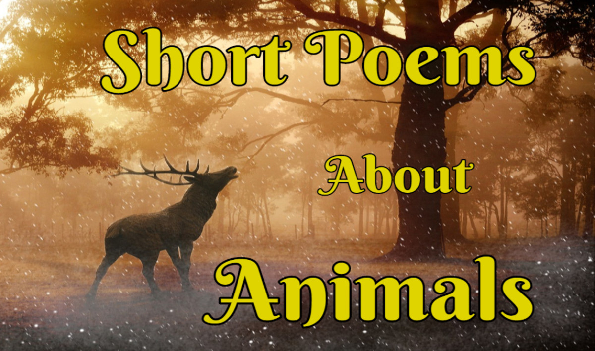Very Short Poems Online About Love, Life, Nature, Race and More