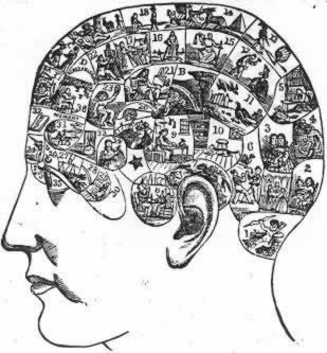 Phrenology map of the human head, used by George Burgess in his profession.