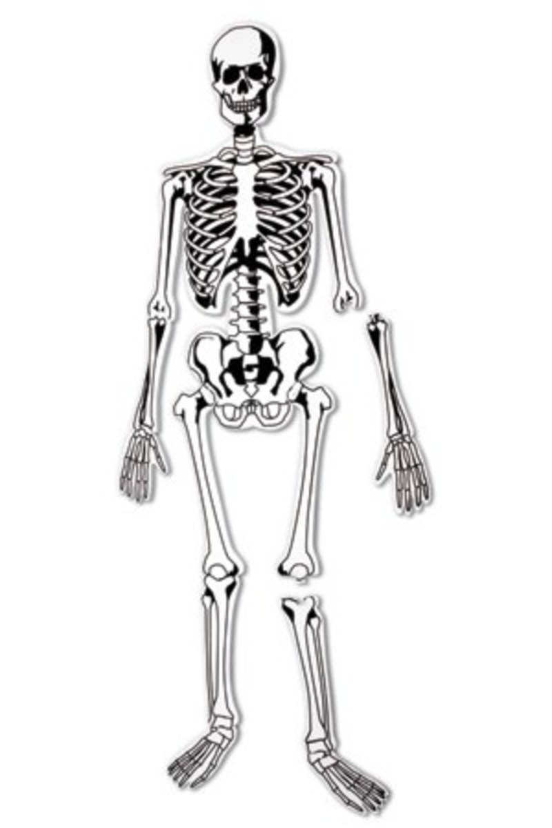 Doin' the Bone Dance and Other Creative Ways to Learn Bone Anatomy