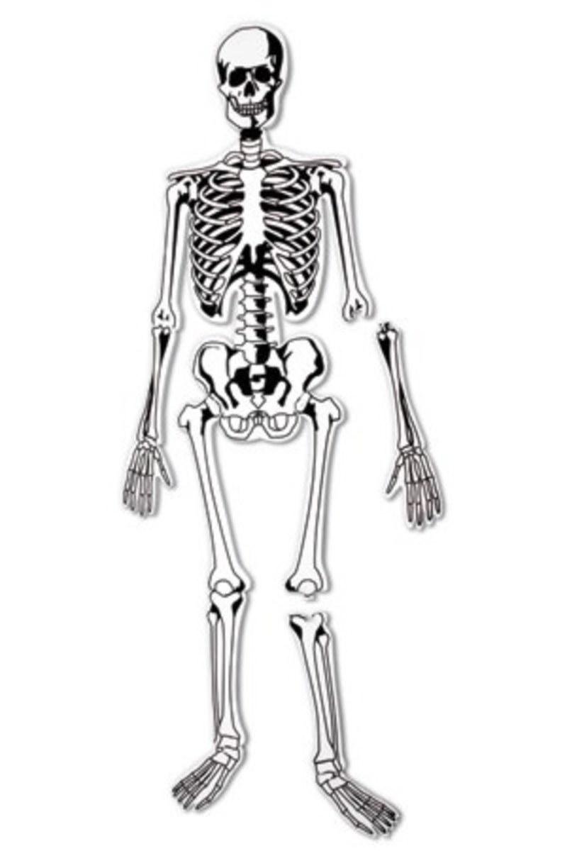 Skeleton Puzzle