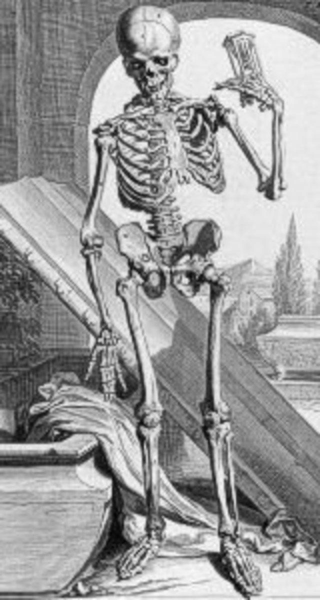 Ontleding des menschelyken lichaams