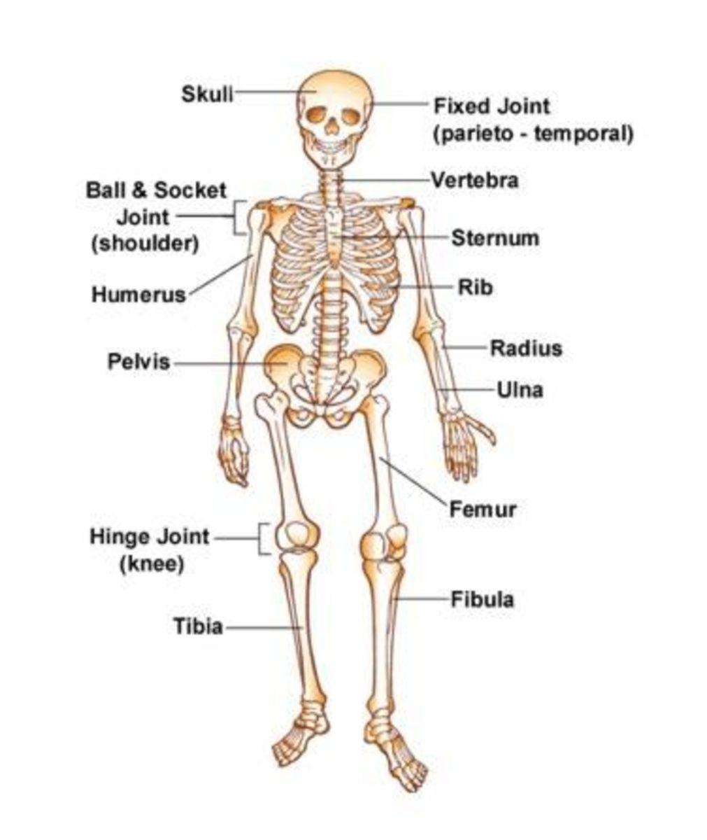 The Big Story on Bones