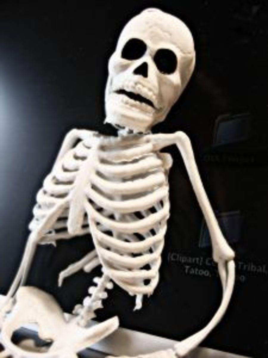Skeleton Toy