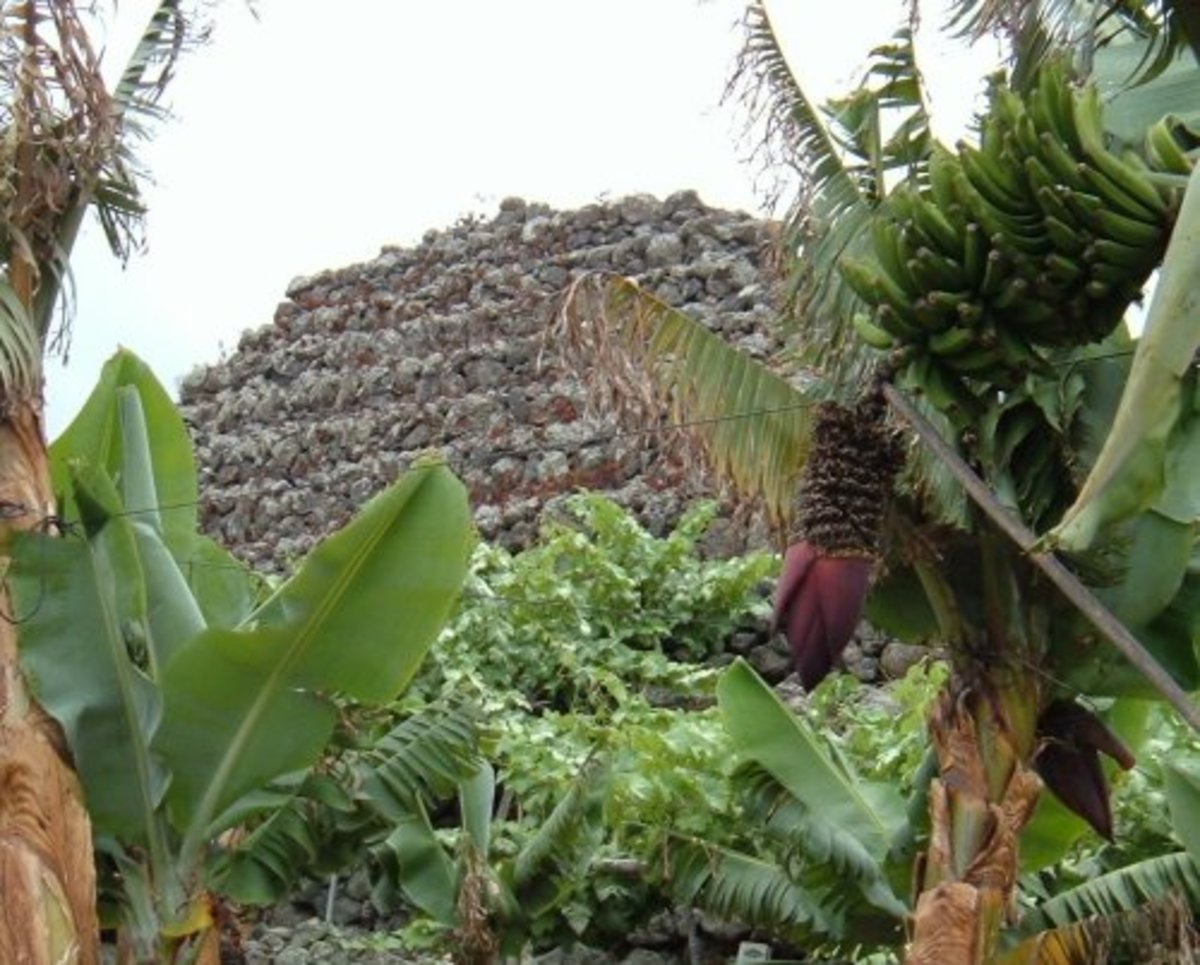 La Suerte pyramid and bananas