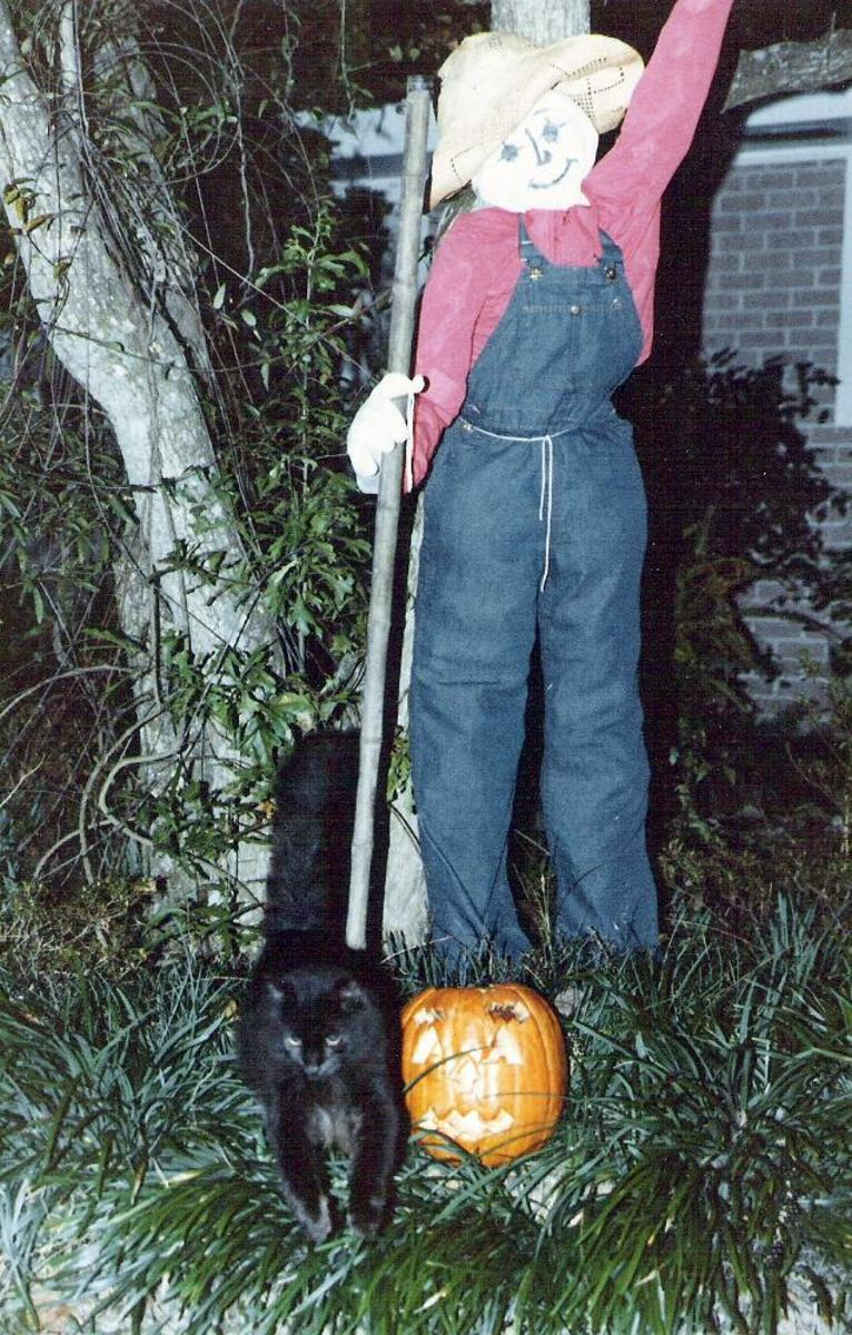 Halloween: Why Cats, Bats, Owls, Spiders, and Toads?