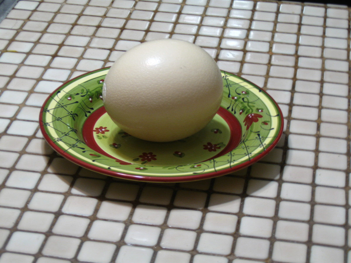 An Ostrich Egg Ready to be Opened