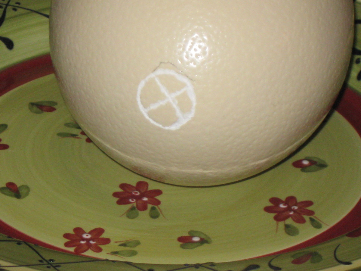 "The ""scored"" tip of the ostrich egg which we were to open and empty the contents from."