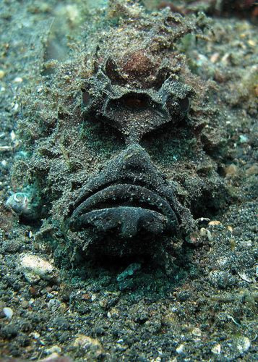 Top ten creepiest fish in the world for Stone fish facts