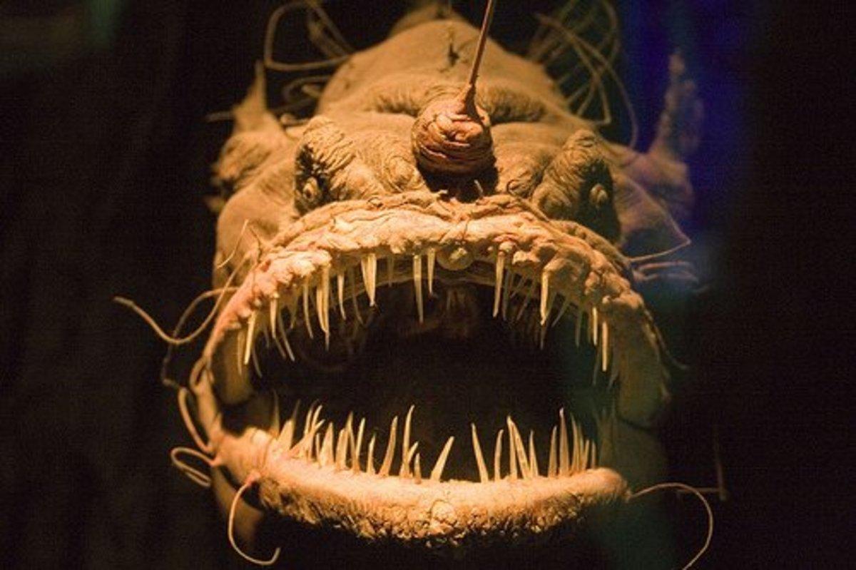 top-ten-creepiest-fish-in-the-world