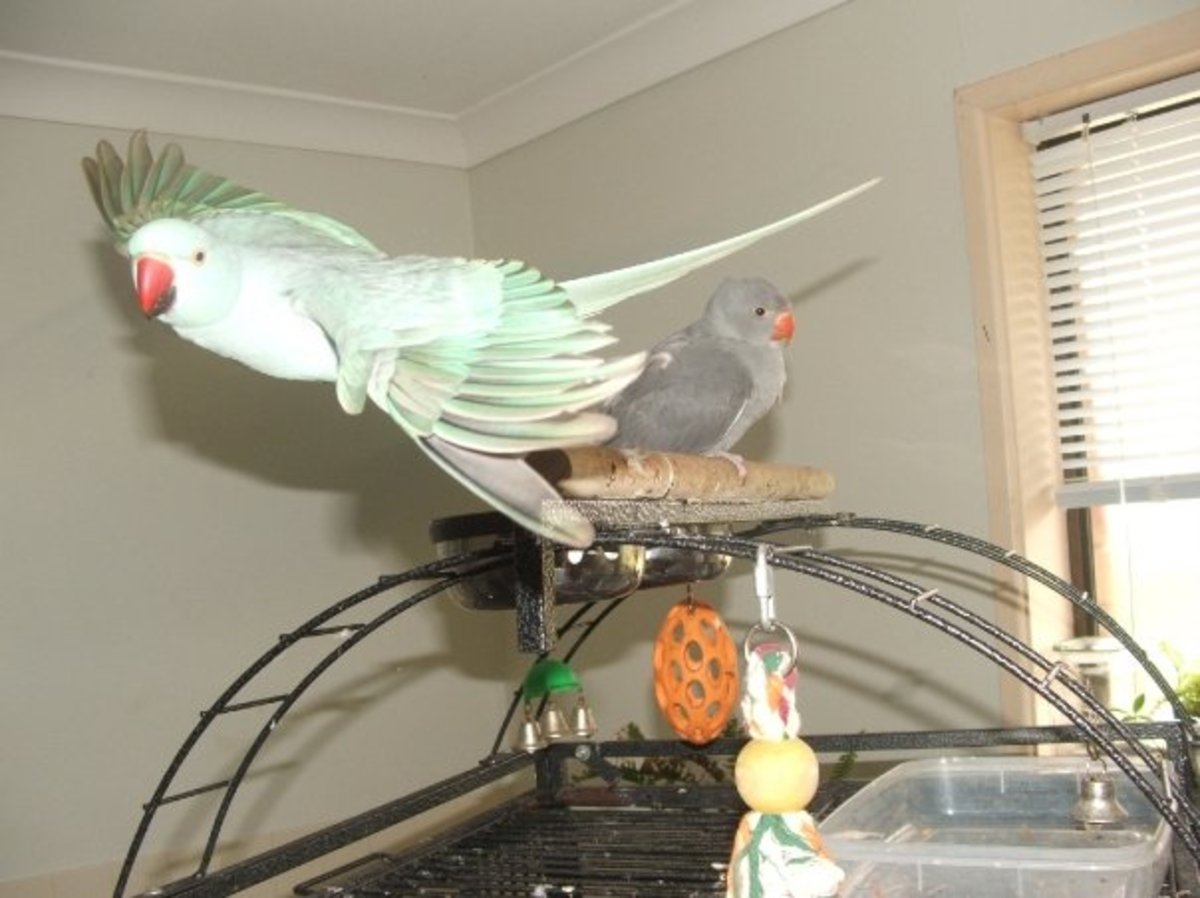 the-day-my-bird-flew-away