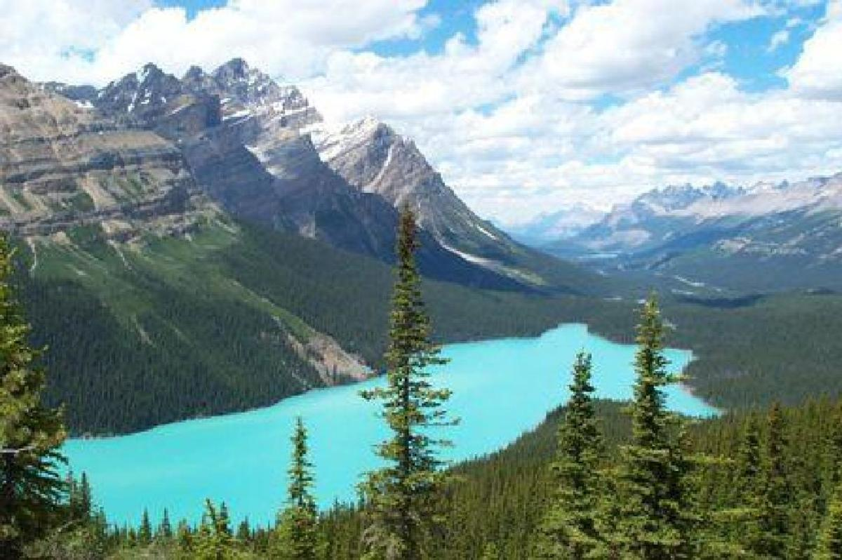 Peyto Lake in the Rockies ALBERTA