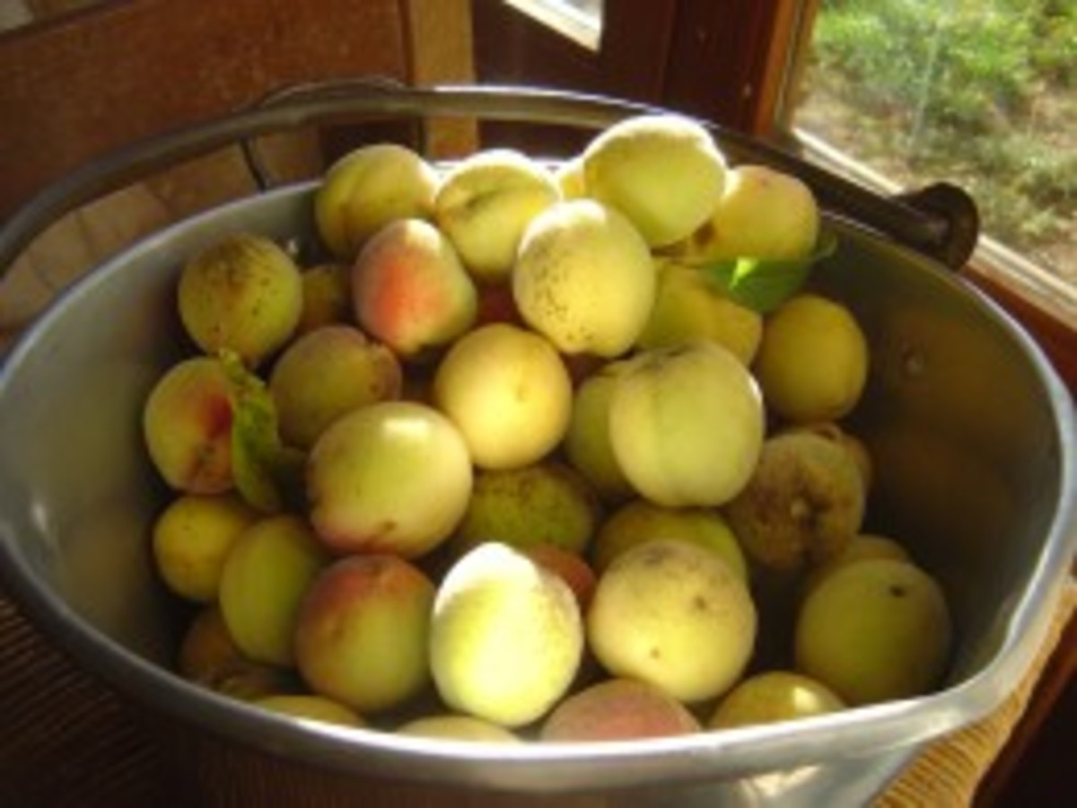 When the peaches are ready they come by the ton and a great way to use the peach glut is to make peach jam.