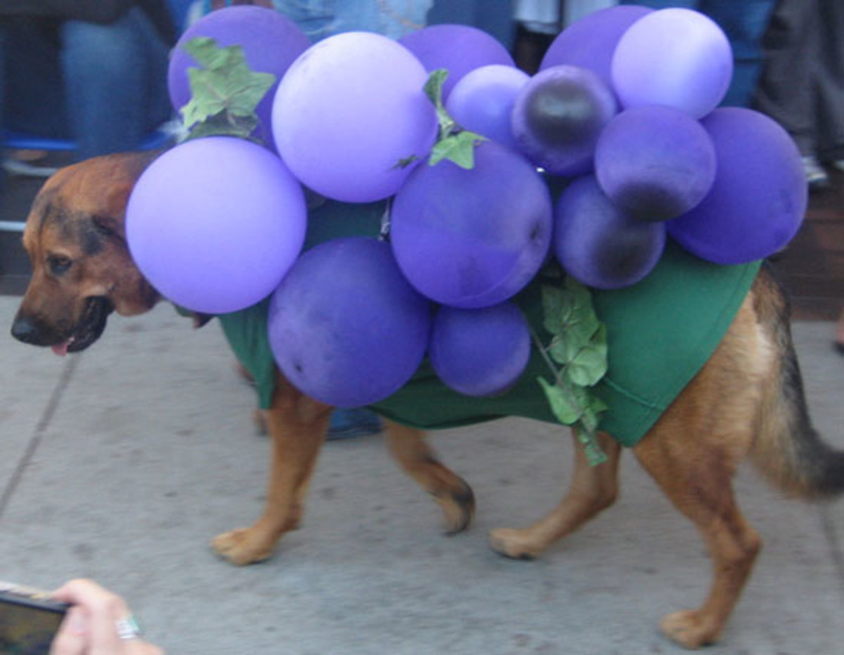 grapes-and-raisins-can-kill-your-dog