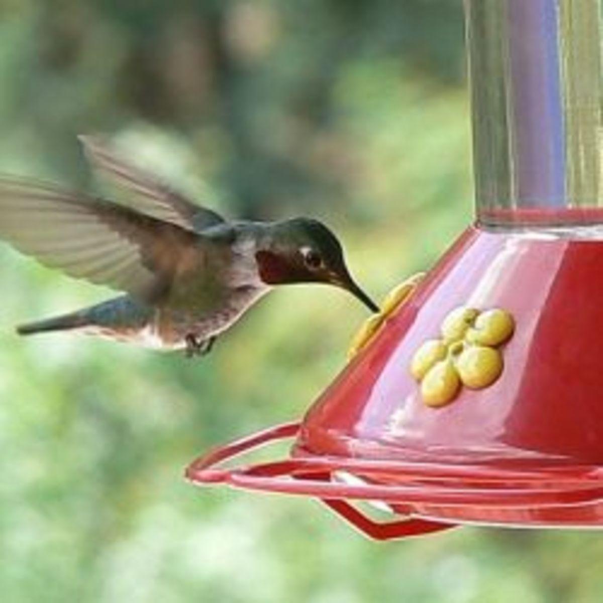 more-backyard-birds