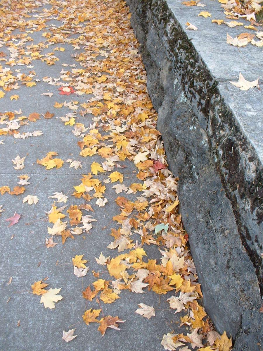 Dead Leaves on Halloween Night