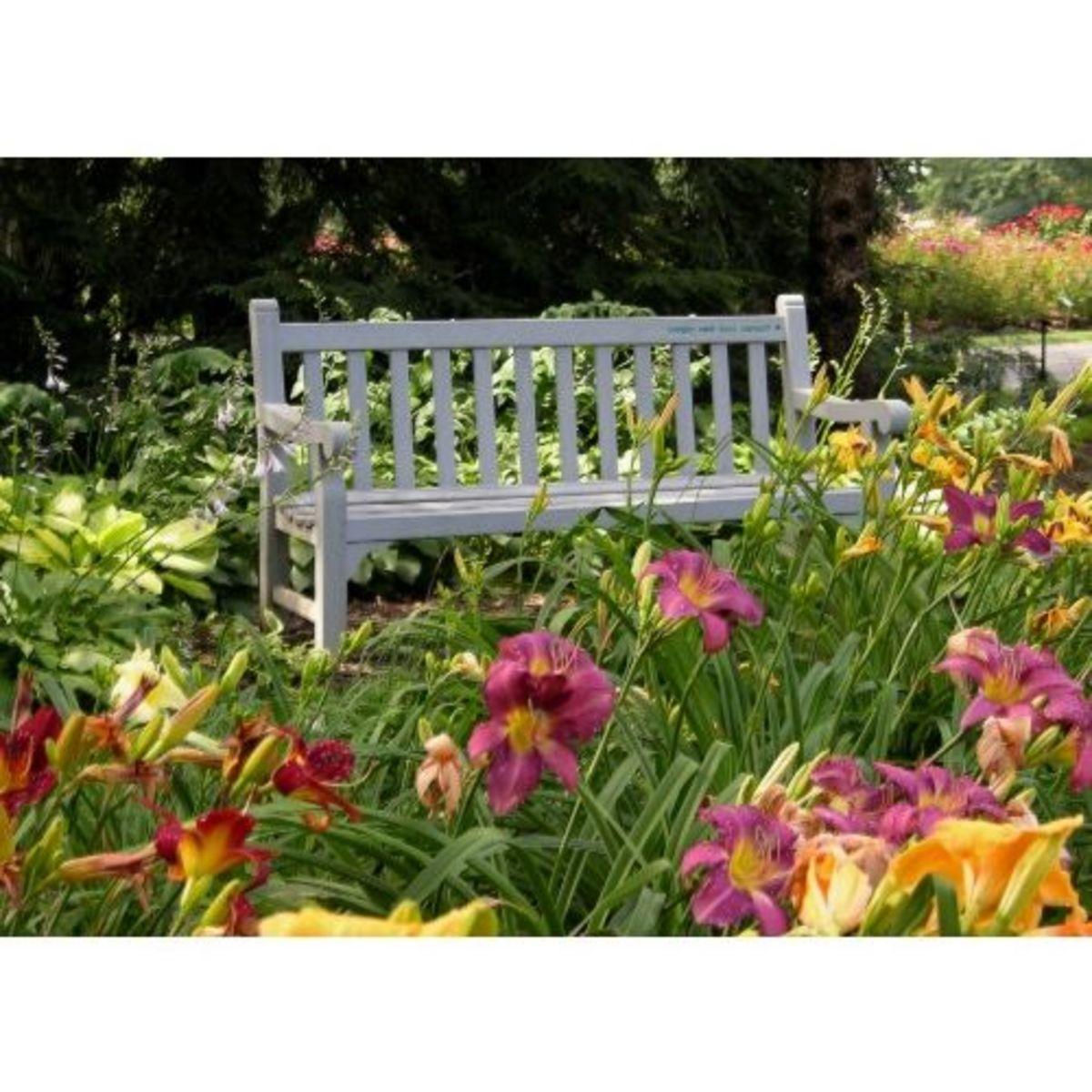 Daylilies in Whetstone Park in late June/early July