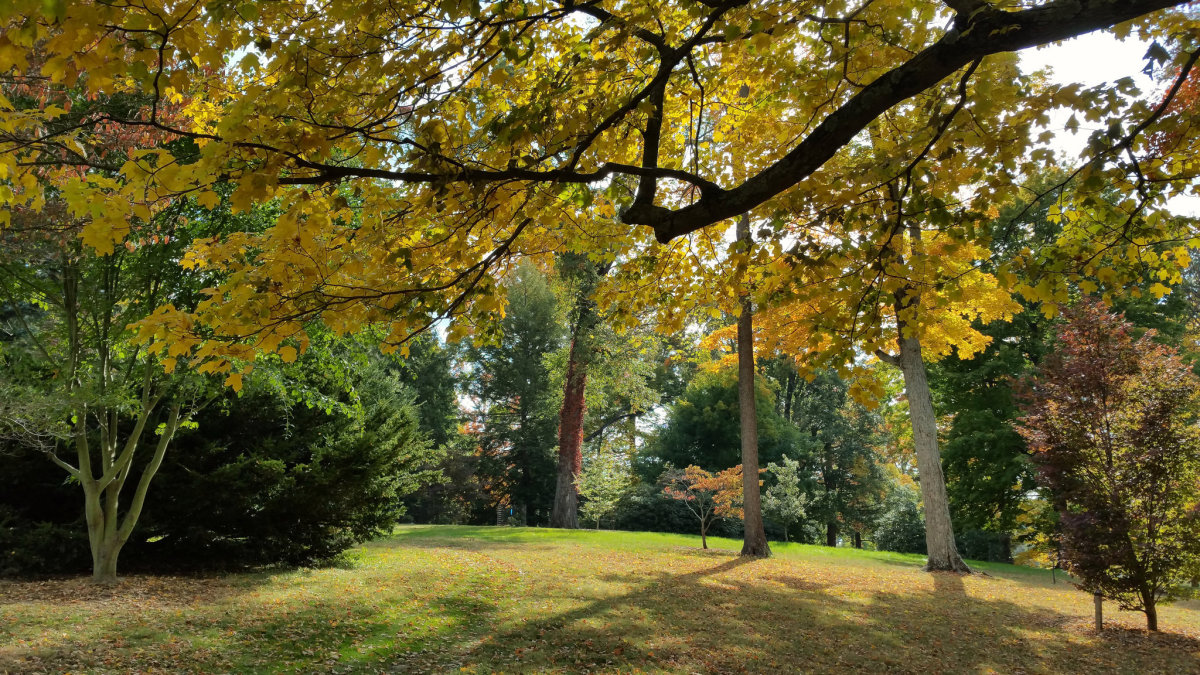 Dawes Arboretum in Autumn | Attribution 2.0 Generic (CC BY 2.0)