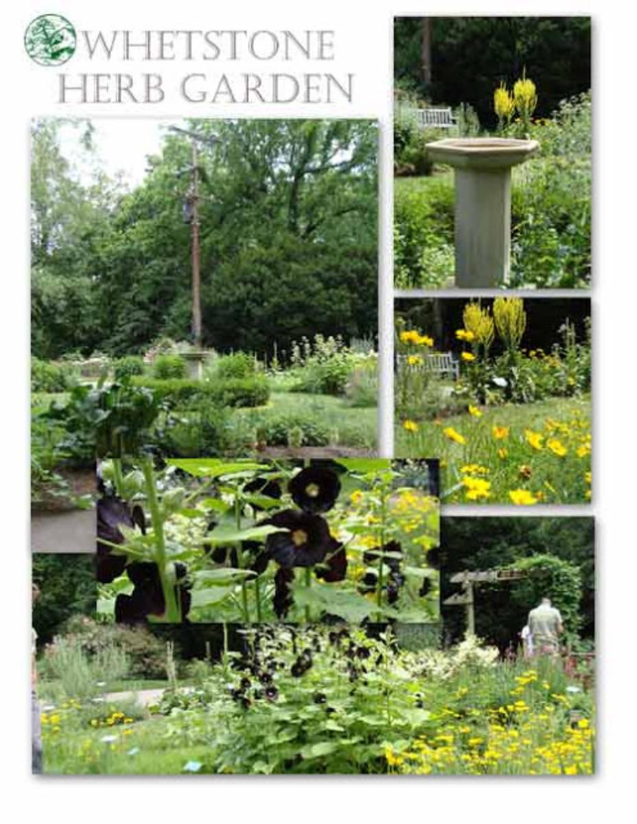 photo by Ilona's Garden