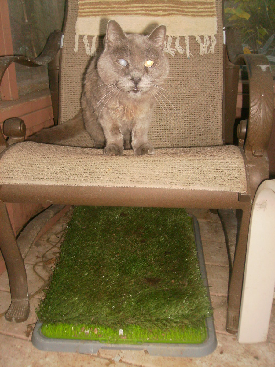 Will a Cat Use Potty Patch Grass Mat instead of a Litter Box? Potty Patch Review