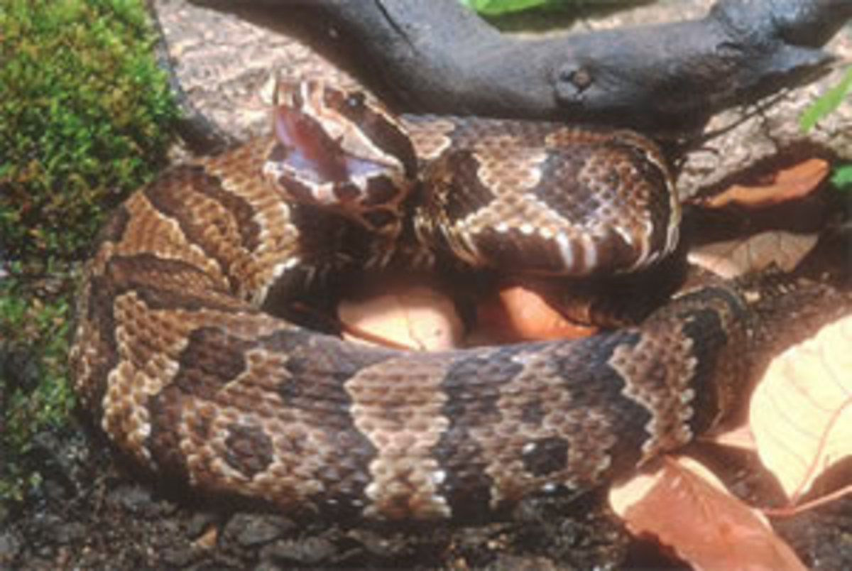 my-personal-encounters-with-venomous-snakes-in-south-florida