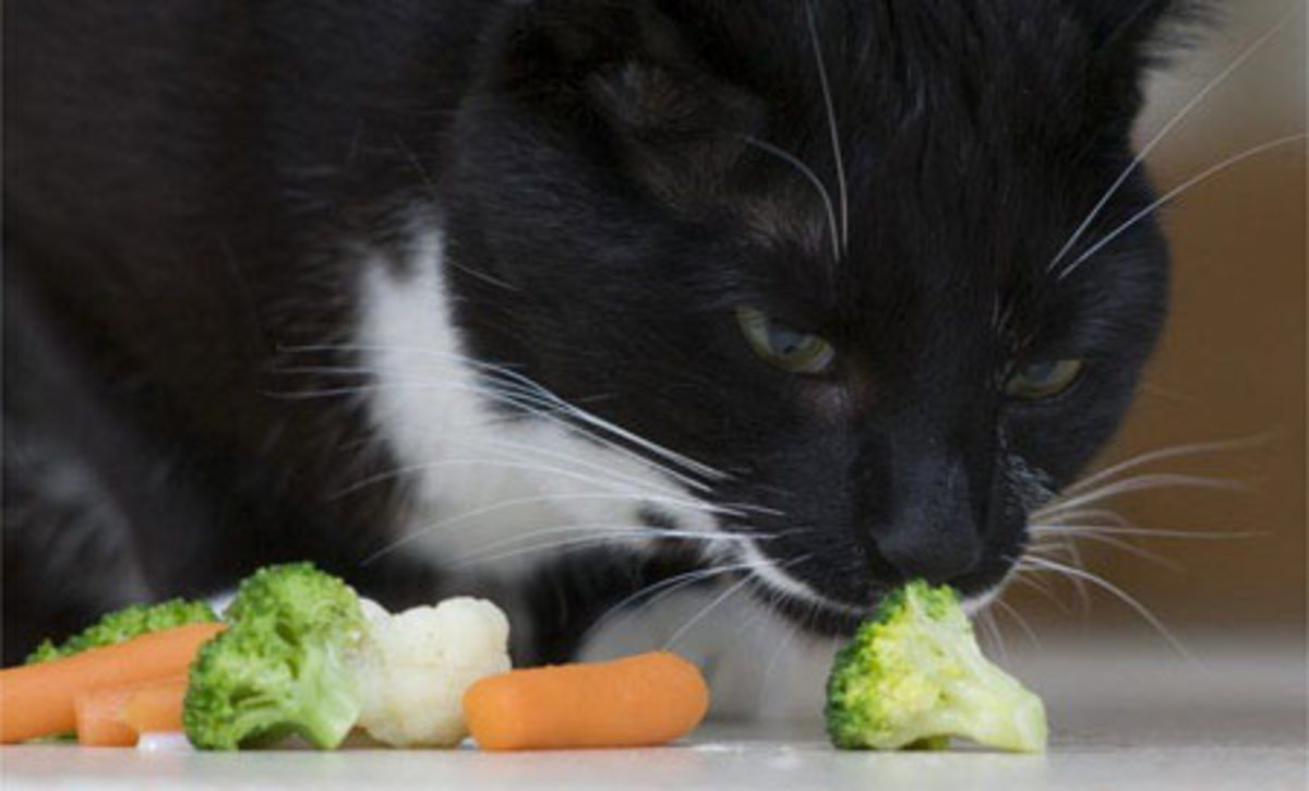Cats can eat cooked broccoli and carrots.