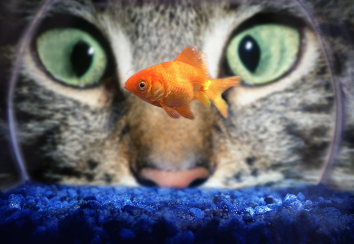 Cats can eat cooked cod, halibut, and flounder.