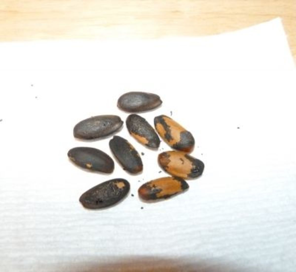 Gray pine cone nuts are about the size of almonds.