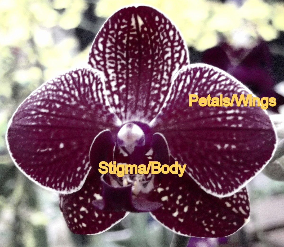 The above is a representation of a flower as seen in the Infra Red spectrum.  Insects see In Ultra Violet. both of these Spectra are invisible to humans.