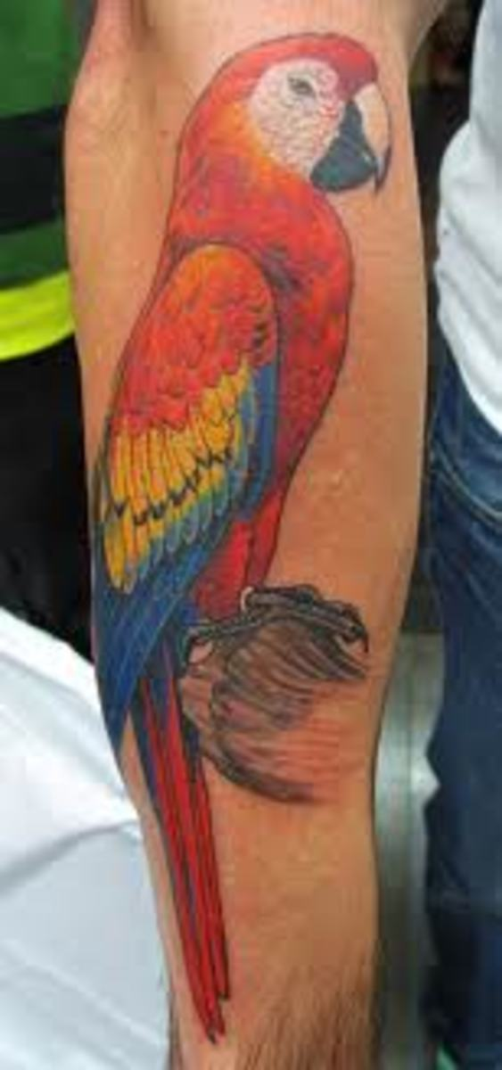 Parrot Tattoos And Designs-Parrot Tattoo Meanings And Ideas