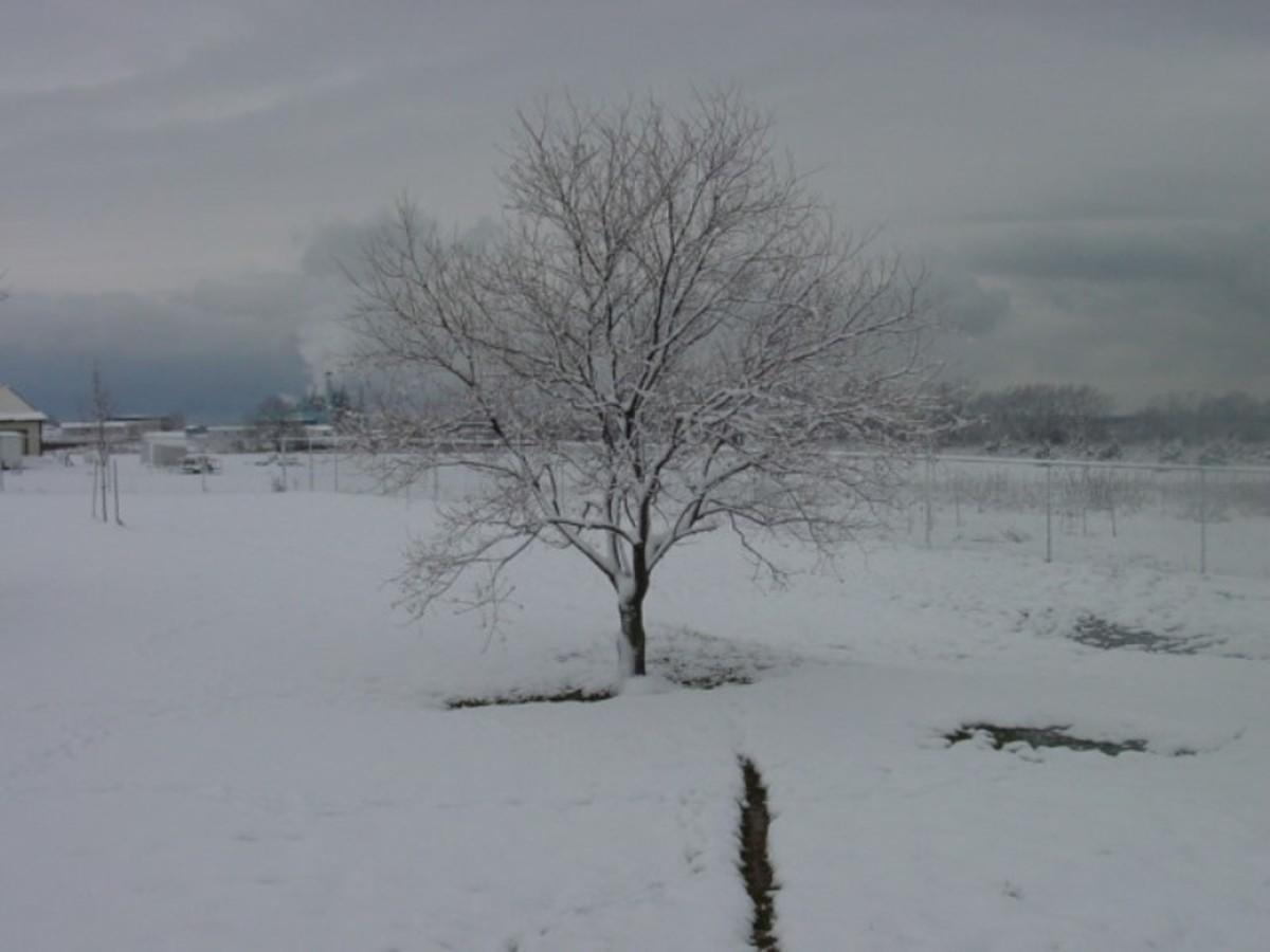 Texas Winter 2002