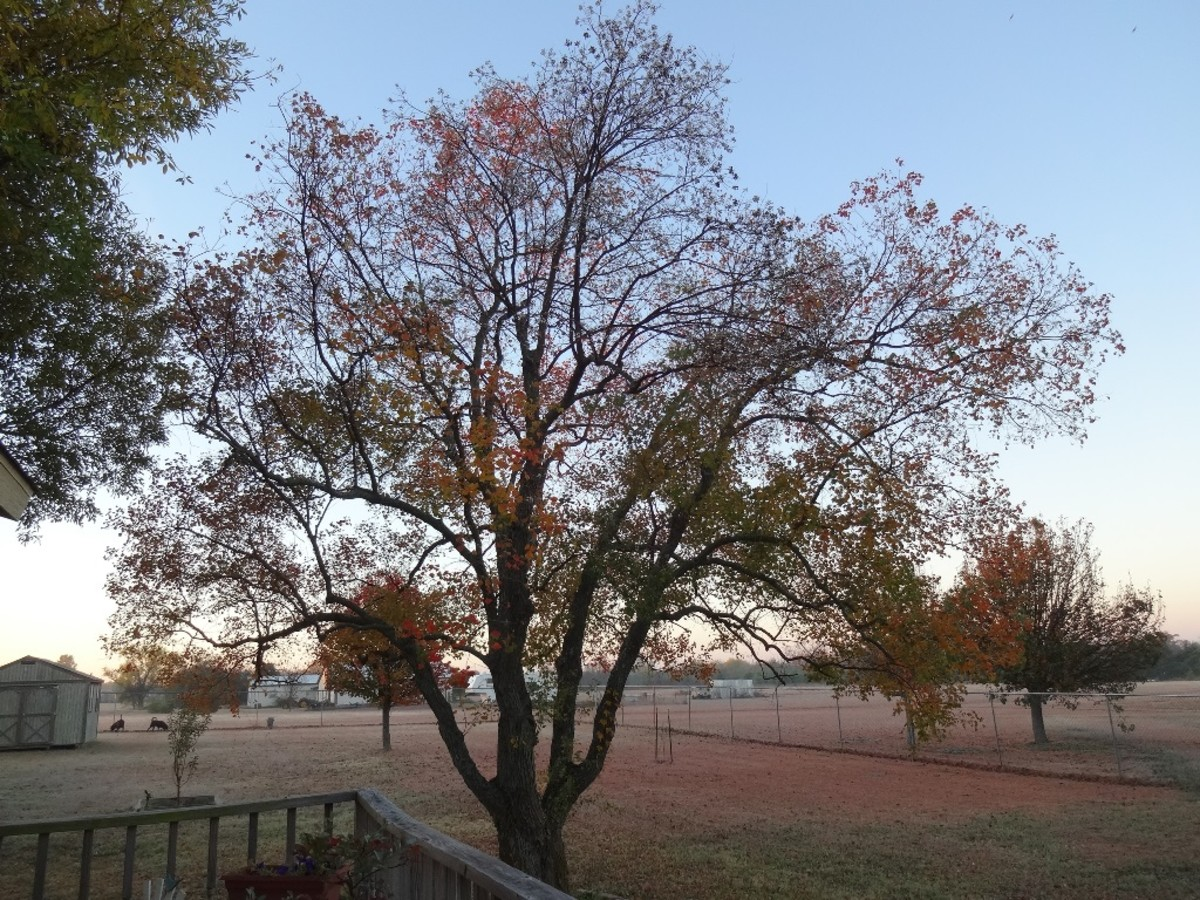 Fall colors change with the year, sometimes orange, other times yellow and rust color.