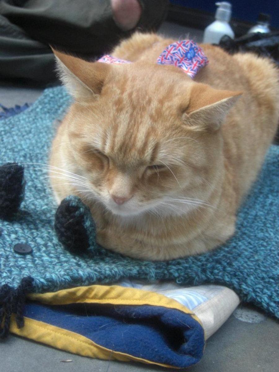 Street cat Bob: photo by Karen Merchant