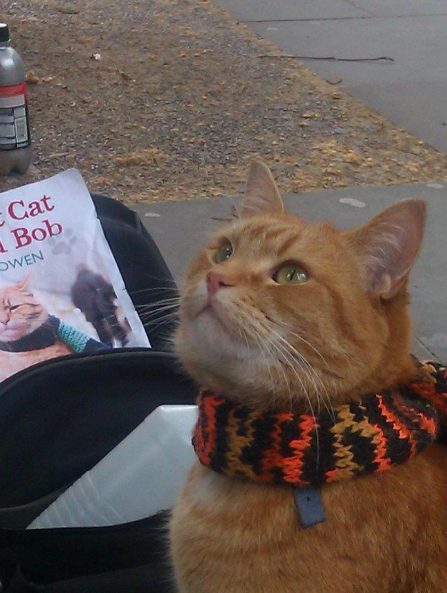 A Street Cat Named Bob and the amazing  history of cats
