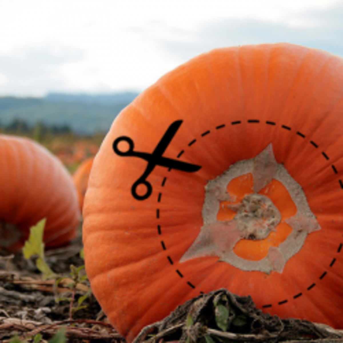 5 Reasons to Cut Your Pumpkin From the Bottom