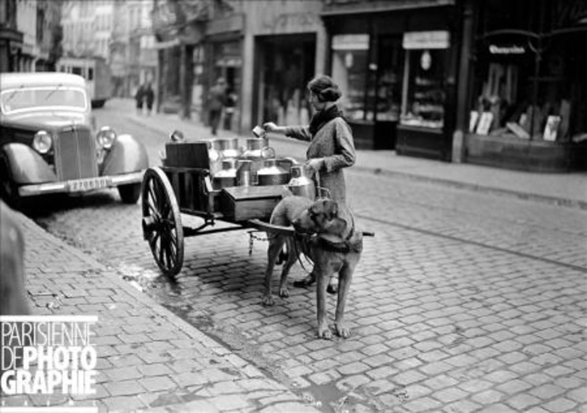 Dog drawn milk delivery cart. Paris 1941. Please note the apparently civilian car (Mercedes-Benz 170 ?) with German registration. Copyright LAPI/Roger-Viollet