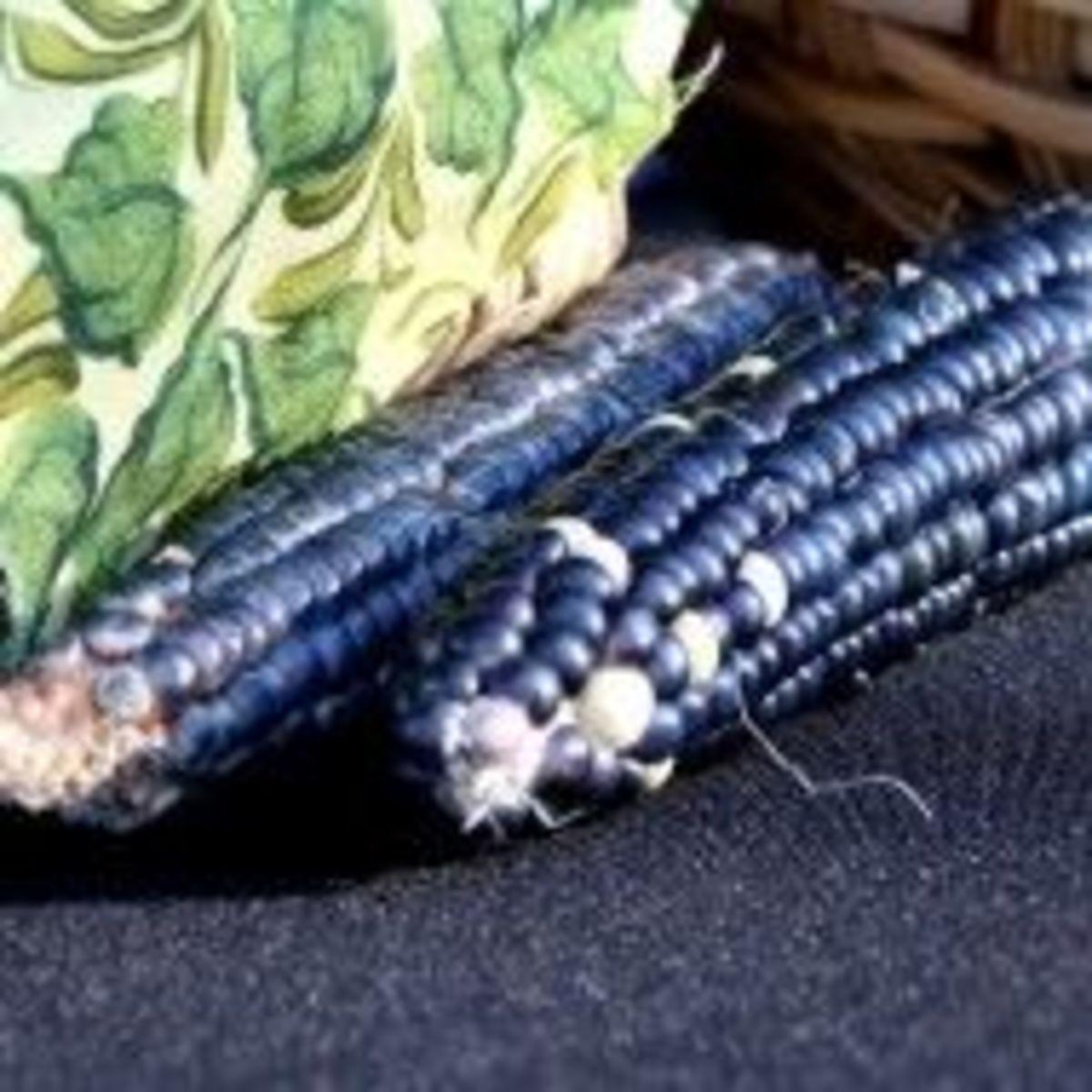 Blue Corn For Corn Recipes