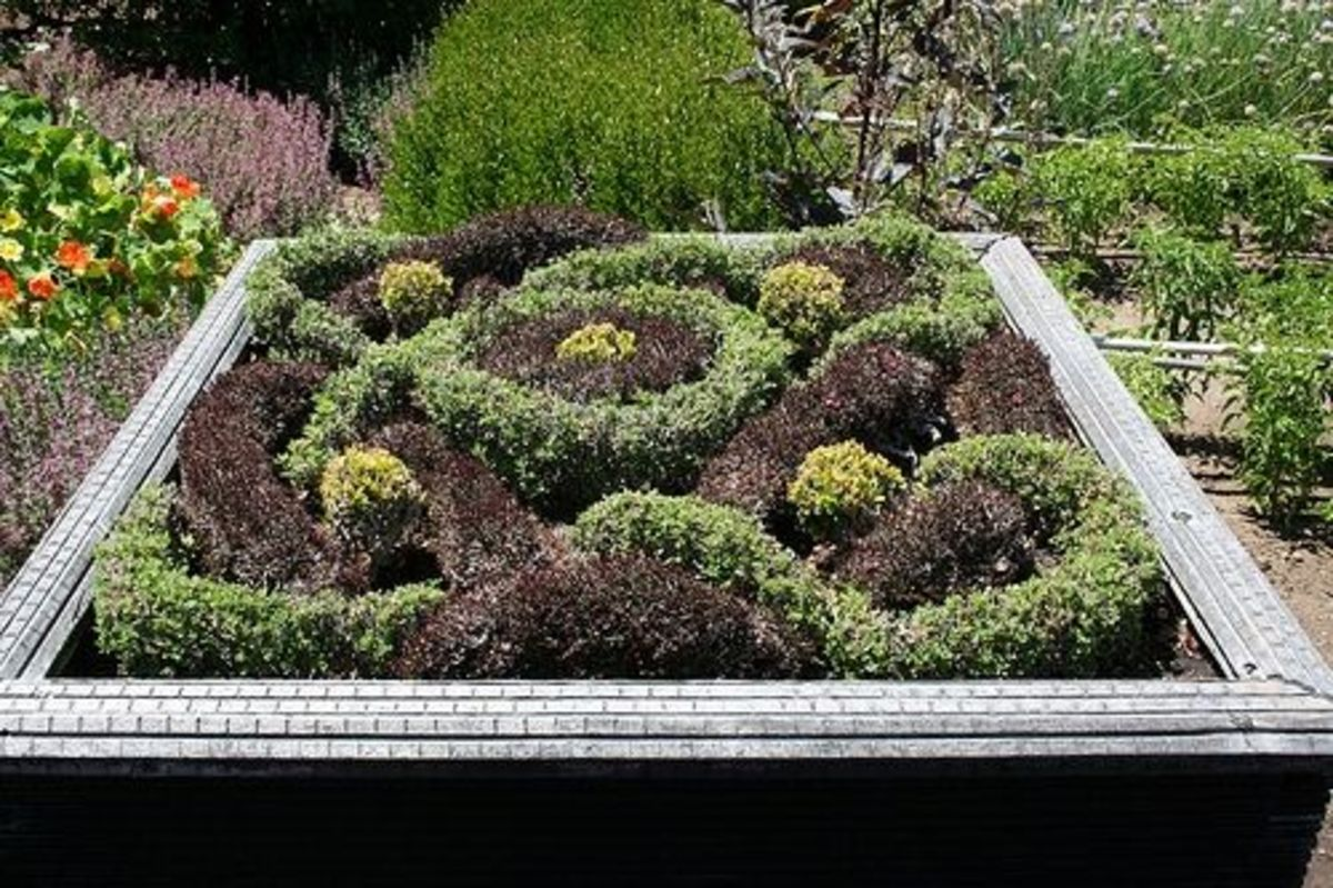 Knot and parterre vegetable and herb gardens for Herb knot garden designs