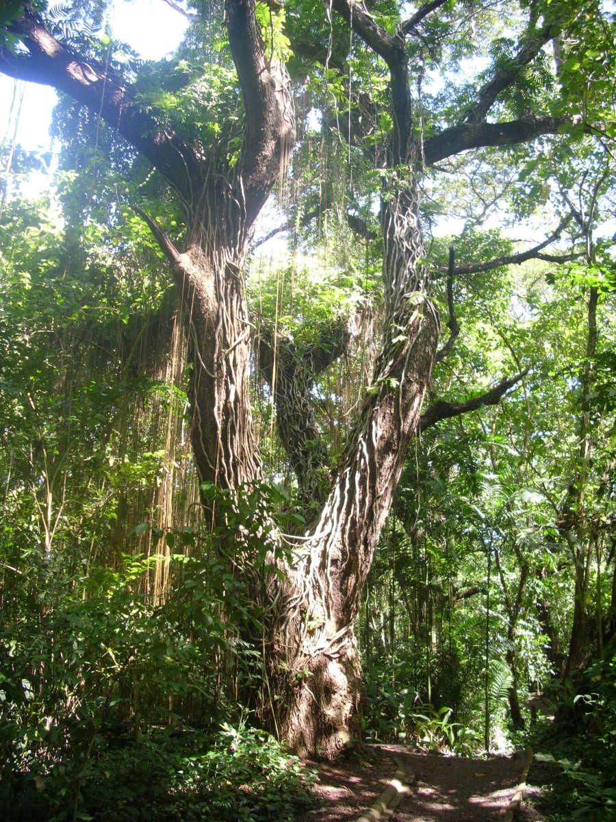 The forest  inside  the Crocodile Farm