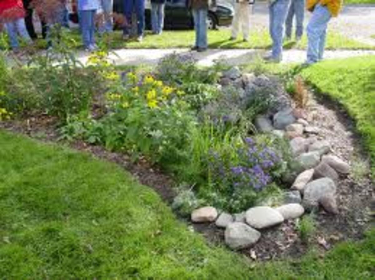 One example of a rain garden design.