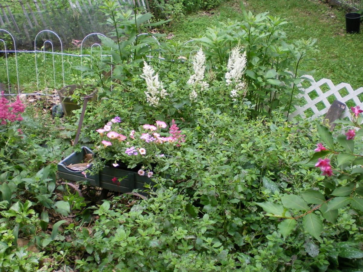 My Rain Garden installed 5 years ago.