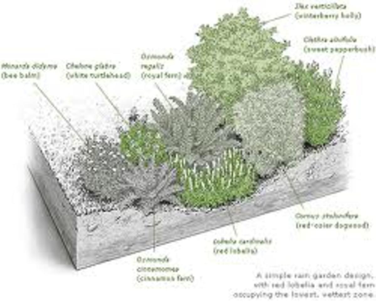 Example of depth of a Rain Garden.