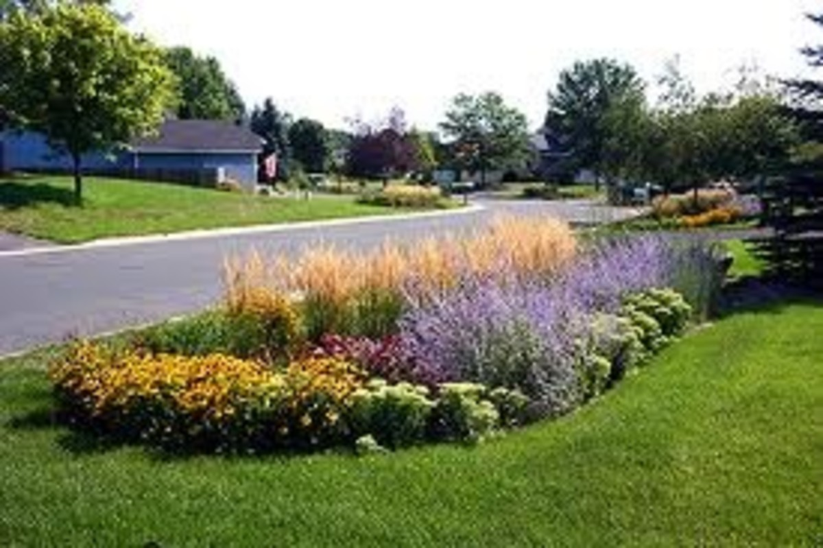Gorgeous Rain Garden in Harrisburg, Pa.